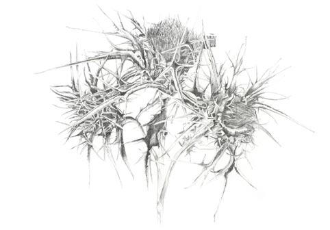 Caroline Hepburne-Scott Gallery
